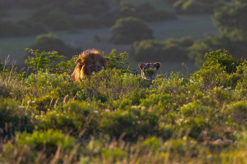 Schotia Safaris Private Game Reserve